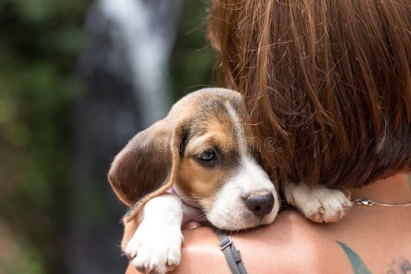 Härligt ungt lyckligt för nätt kvinna med den lilla hundvalpbeaglet Tropisk ö Bali, Indonesien Dam med beaglet royaltyfria bilder
