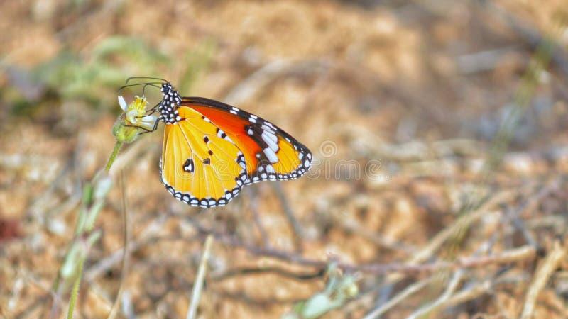 Härligt utomhus- för fjärilsdjurlivnatur arkivbild
