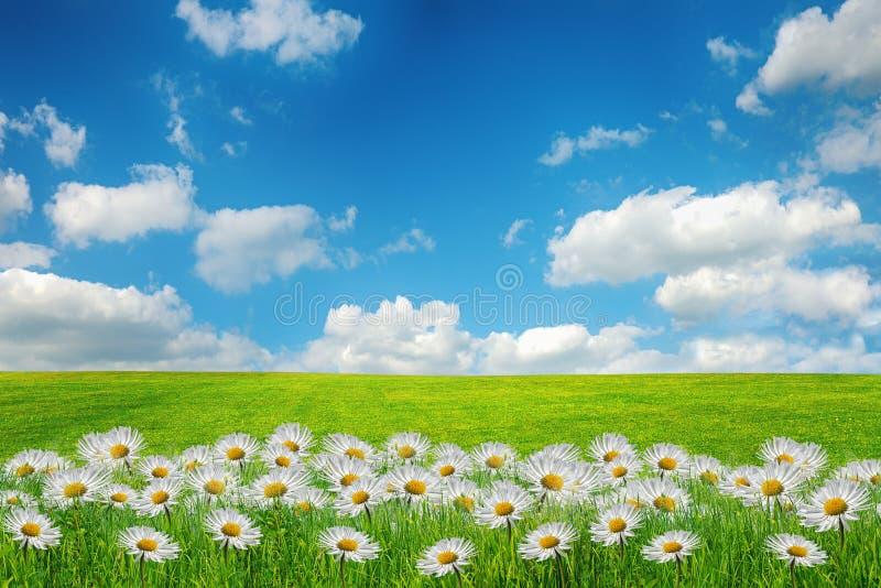 Härligt vårfält med blommor arkivfoto