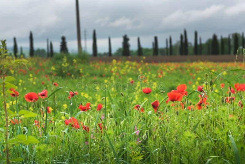 Härligt vårlandskap i Tuscany arkivbild