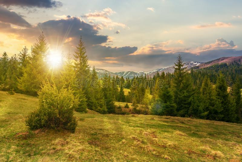 Härligt vårlandskap på solnedgången royaltyfri bild