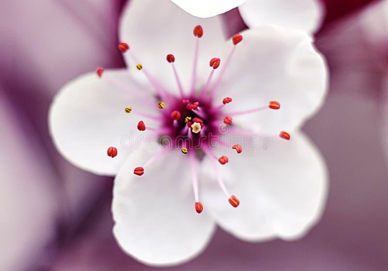 härligt vatten för blommafjädersun royaltyfri bild
