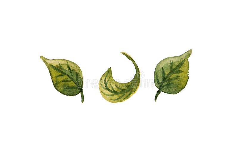 Härligt vattenfärg för gräsplan för abstrakt begrepp som tre dragen blad isoleras på stock illustrationer