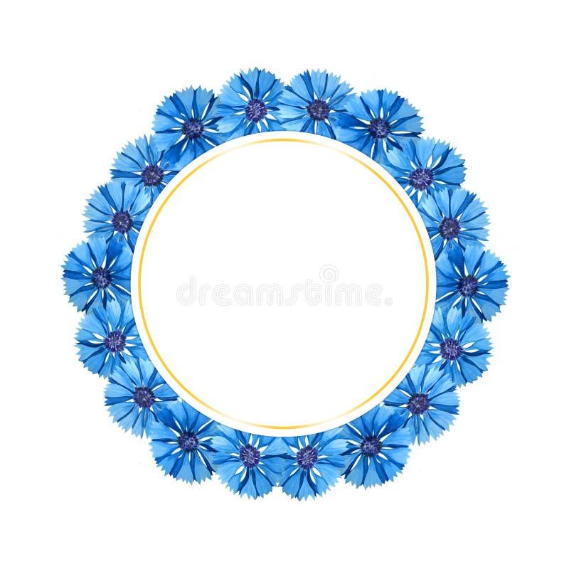 Härligt vattenfärgkort med blåklinter Blommor som isoleras p? vitbakgrund vektor illustrationer