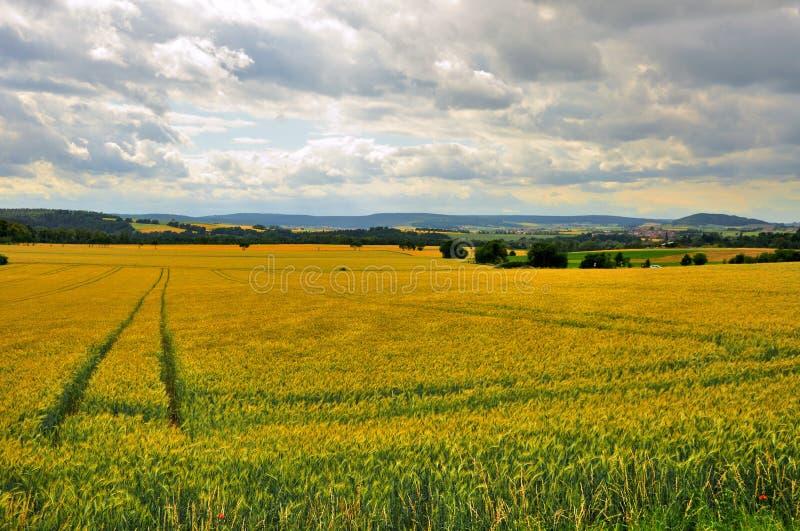 Härligt vetefält nära Schloss Fasanarie i Fulda, Hessen, Tyskland arkivfoton