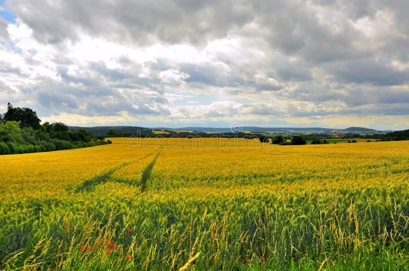 Härligt vetefält nära Schloss Fasanarie i Fulda, Hessen, Tyskland royaltyfri bild
