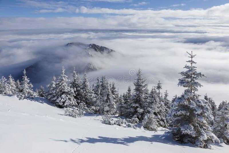 Härligt vinterberglandskap i Carpathiansna, Rumänien Ovanför molnen hav av moln royaltyfri bild