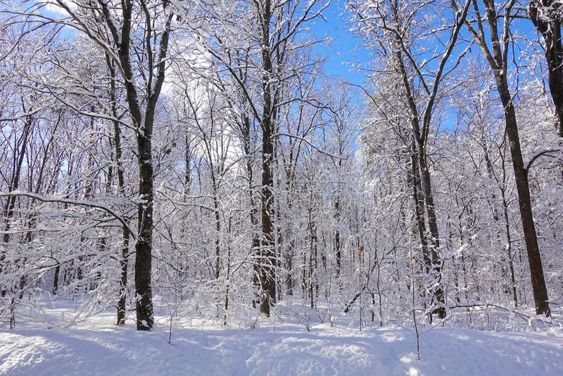 Härligt vinterjullandskap Djupfrysta träd i blå klar himmel för vit frost fotografering för bildbyråer