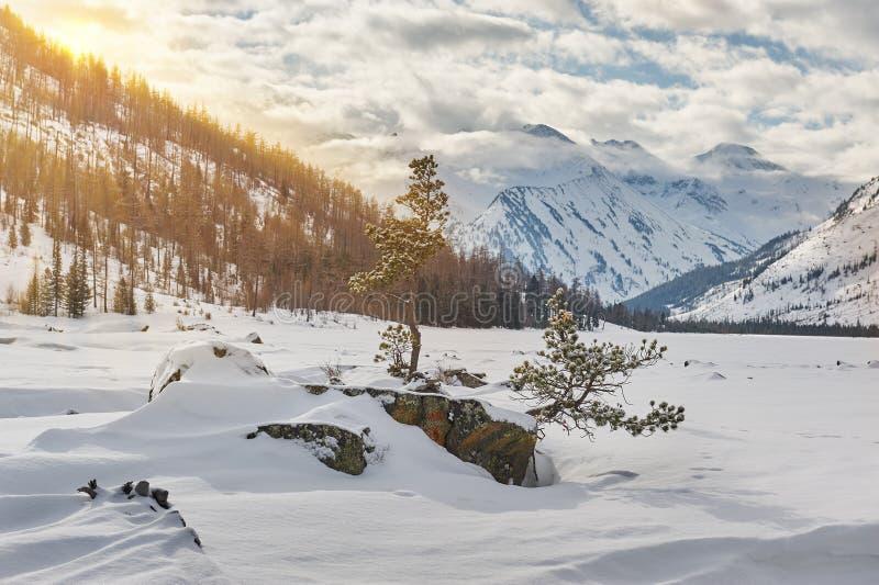 Härligt vinterlandskap, Altai berg, Sibirien, Ryssland royaltyfria foton