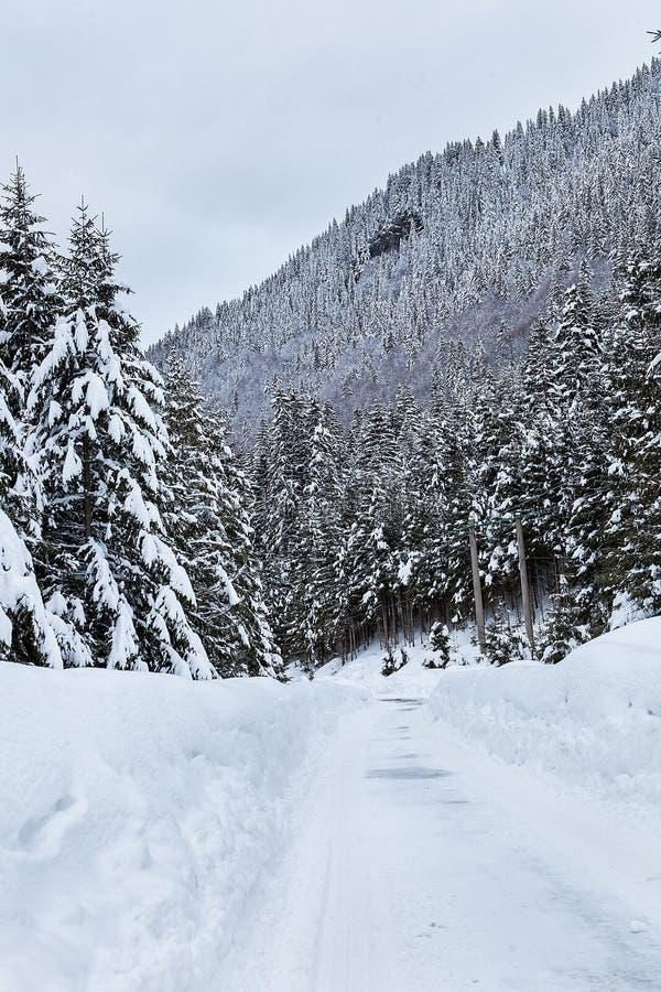 Härligt vinterlandskap med blandad snö arkivfoto
