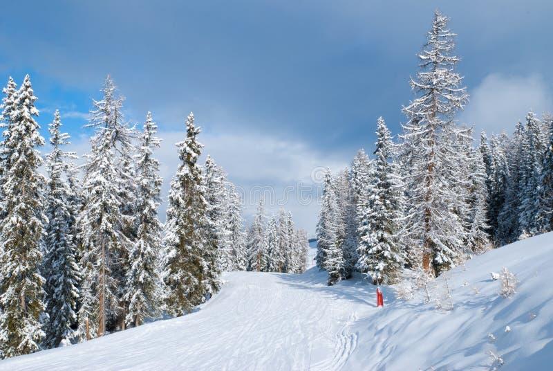 Härligt vinterlandskap med granträd arkivbild