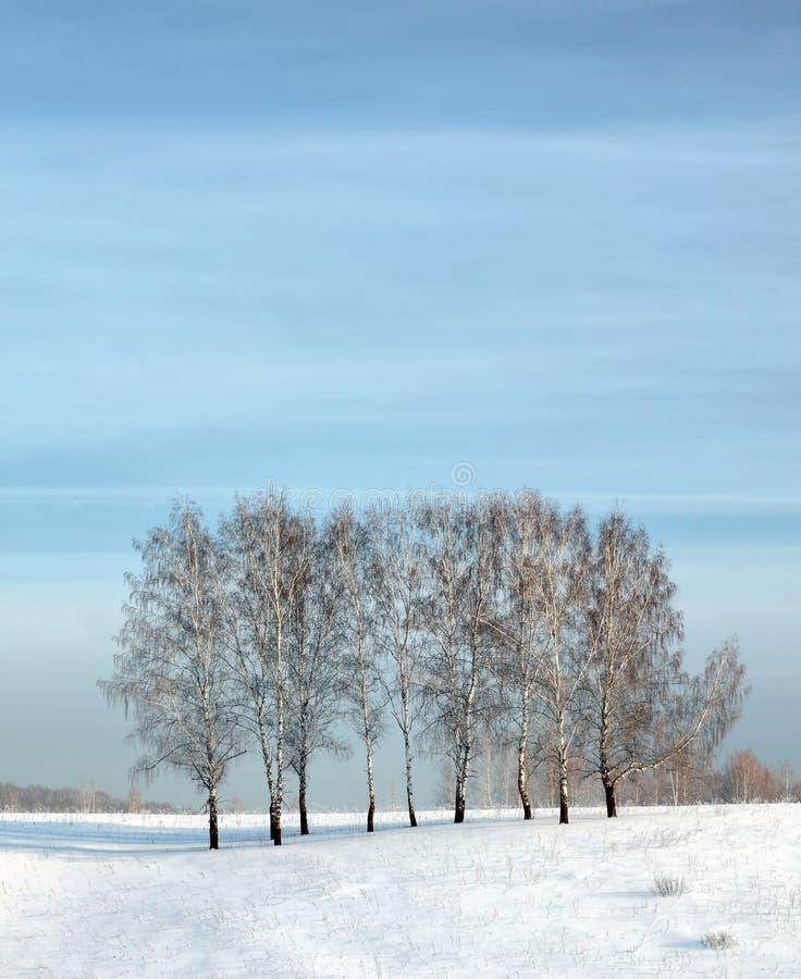 Härligt vinterlandskap med några björkträd på fältet royaltyfri fotografi