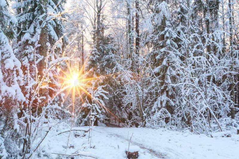 Härligt vinterlandskap med snö-täckte träd i skog royaltyfria foton