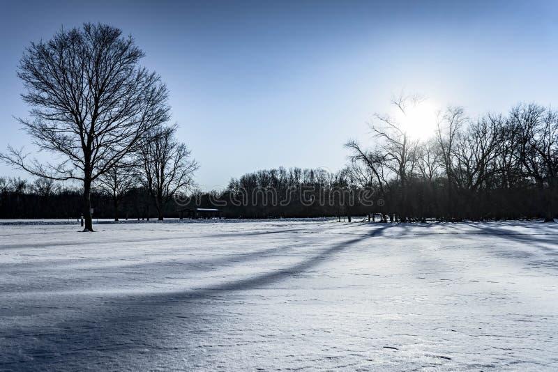 Härligt vinterlandskap med träd och sol royaltyfri bild