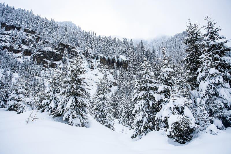 Härligt vinterlandskap med tung snö för trädunde royaltyfri foto
