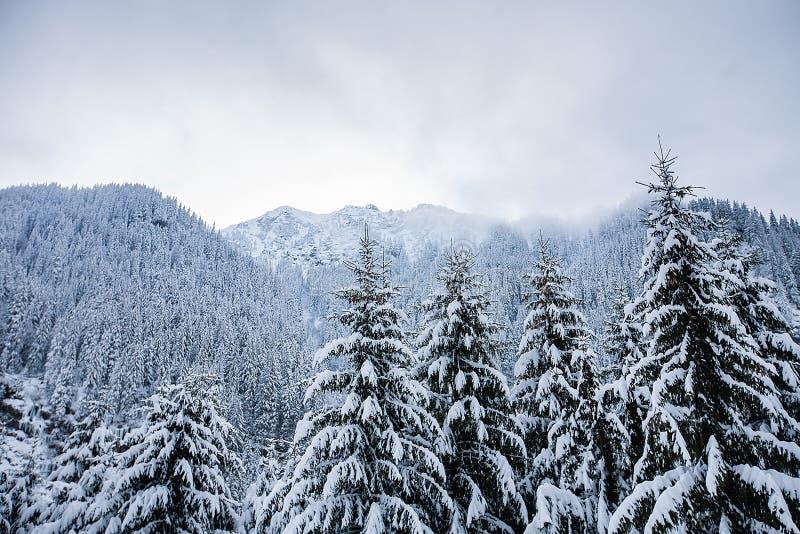 Härligt vinterlandskap med tung snö för trädunde royaltyfria foton