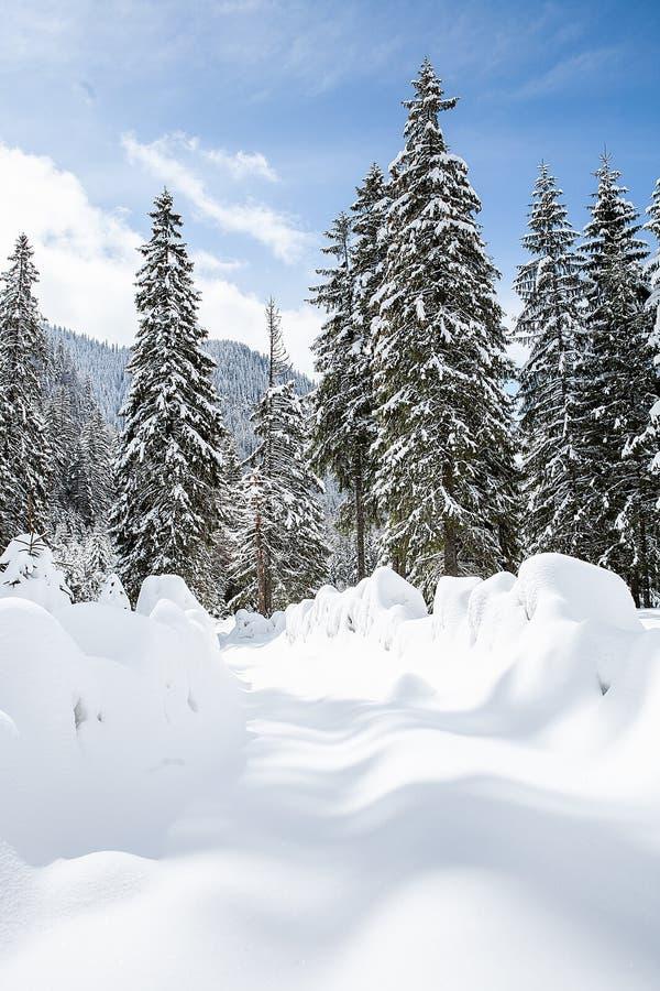 Härligt vinterlandskap med tung snö för trädunde arkivbild