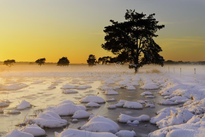 Härligt vinterlandskap på solnedgången med snö och dimma royaltyfria foton