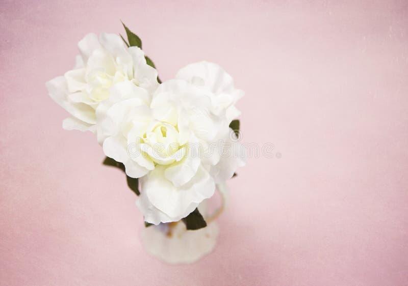 Härligt vitt silke steg royaltyfri bild