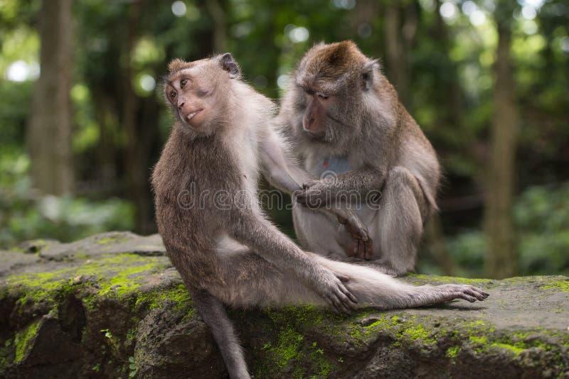 Härma mannen och kvinnlign i en skog nära Ubud, Bali royaltyfri bild