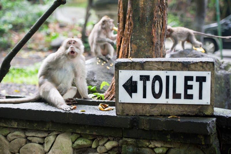 Härma sent för en toalett i skog i Bali arkivbilder