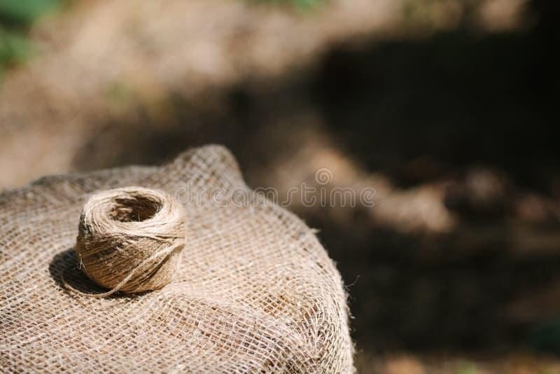 Härvan av tvinnar lögner på trädstubbe arkivfoton