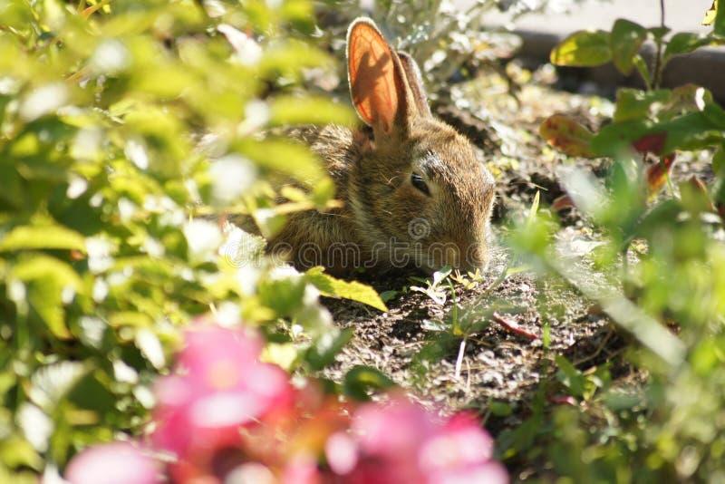 Häschen, das im Blumengarten stillsteht stockfotos
