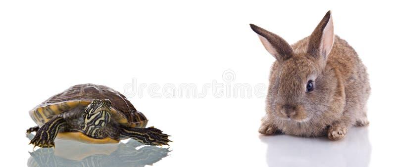 Häschen und Schildkröte stockbilder