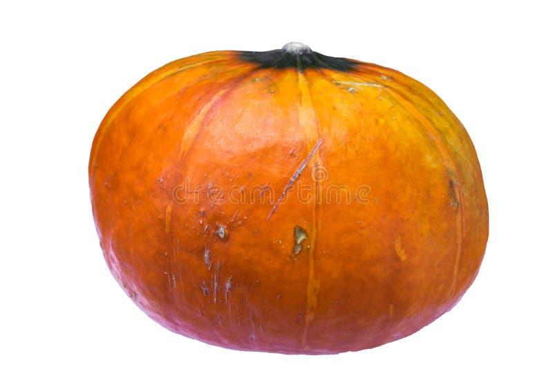 Hässlicher Herbstkürbis lokalisiert auf weißem Hintergrund lizenzfreies stockfoto