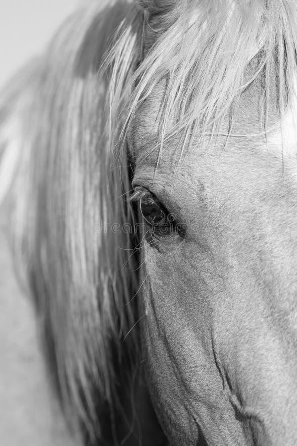 Hästöga i svartvitt royaltyfri fotografi