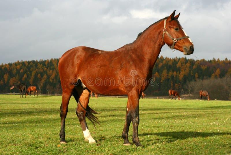 häst 10 arkivbilder