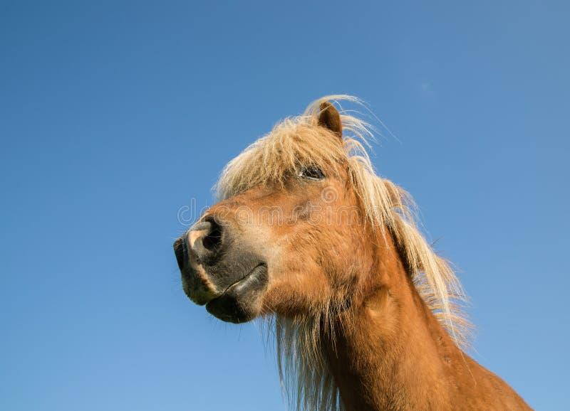Häst arkivbilder