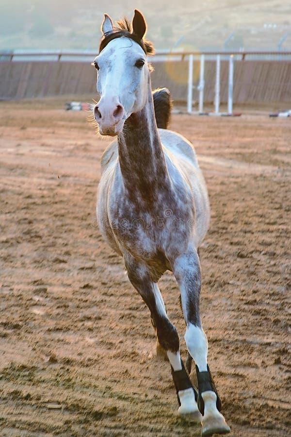 Häst royaltyfria foton