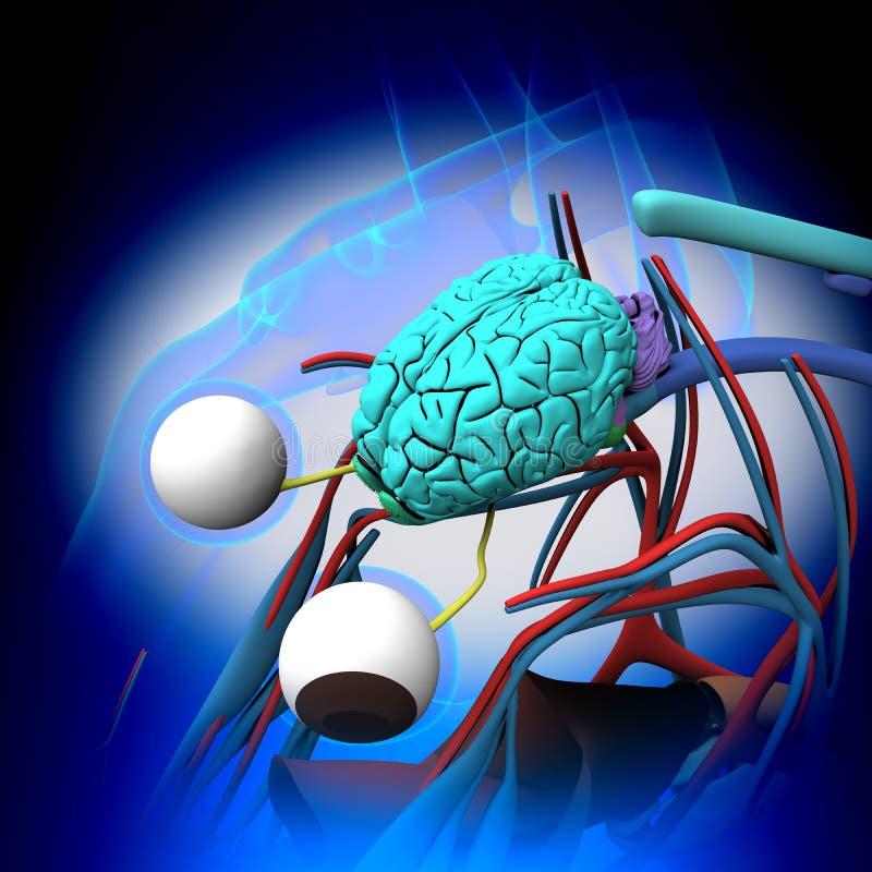 Häst Brain Anatomy - tvärsnitt på blå bakgrund vektor illustrationer