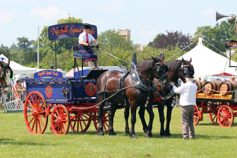 Häst dragen bryggerivagn. arkivbild