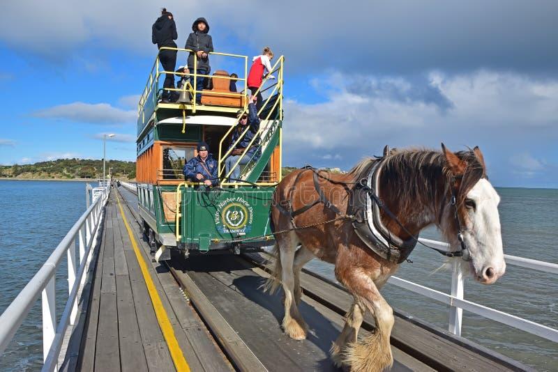 Häst dragen spårvagnchaufför som kontrollerar den Clydesdale hästen längs vägbanken från sjösidagranitön till Victor Harbor