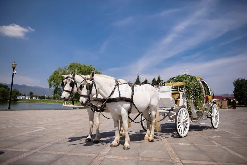 Häst dragen vagn arkivbilder
