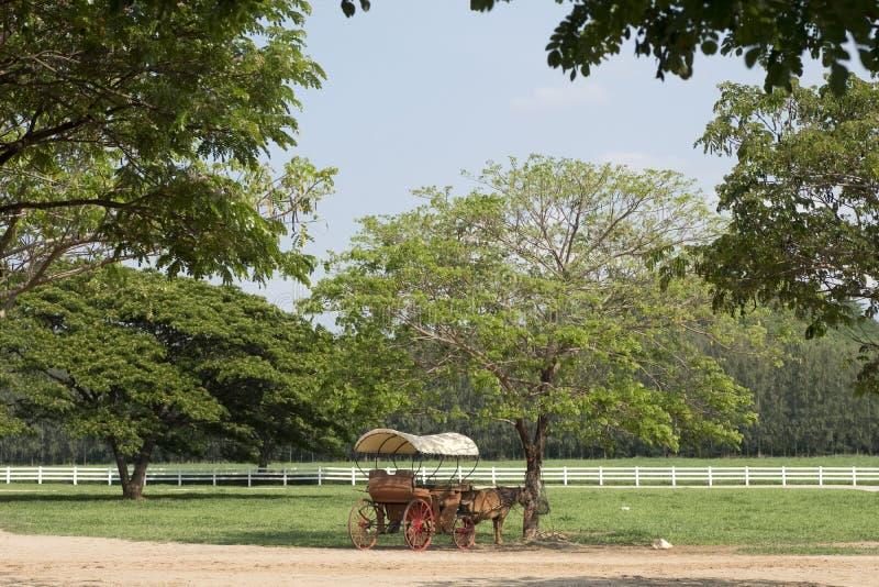 Häst dragen vagn eller calesa i lantgård royaltyfria bilder