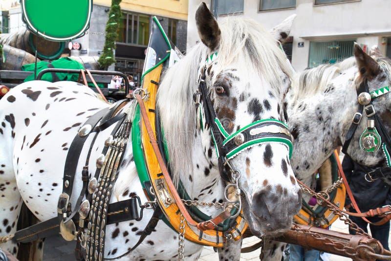 Häst-drivande vagn på den Hofburg slotten, Wien arkivfoto