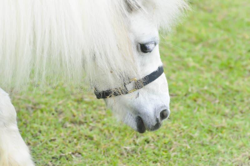 Häst- eller ponny` s som äter något gräs på lantgården royaltyfri foto