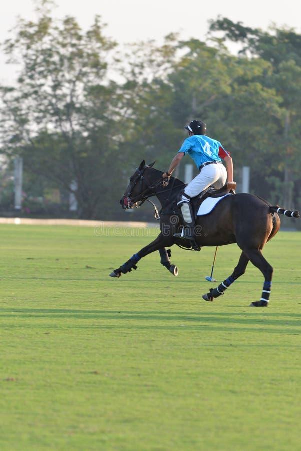 Häst för ridning för hästpolospelare i lekar arkivbild