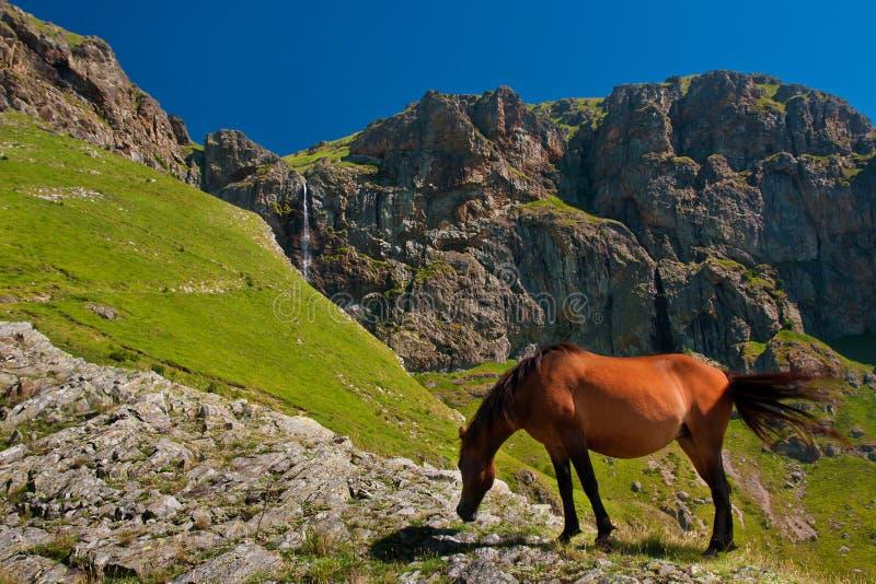 Häst framme av bergvattenfallet royaltyfria foton