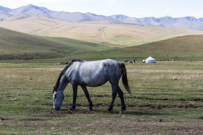 Häst i bergen av Kasakhstan royaltyfri foto