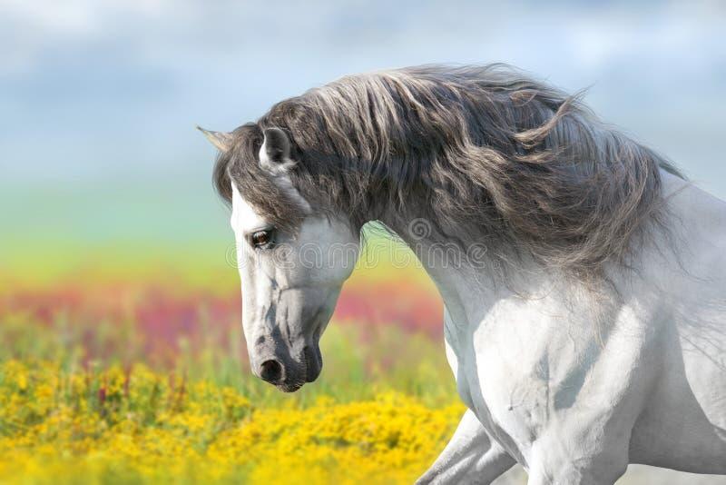 Häst i blommaäng arkivbilder