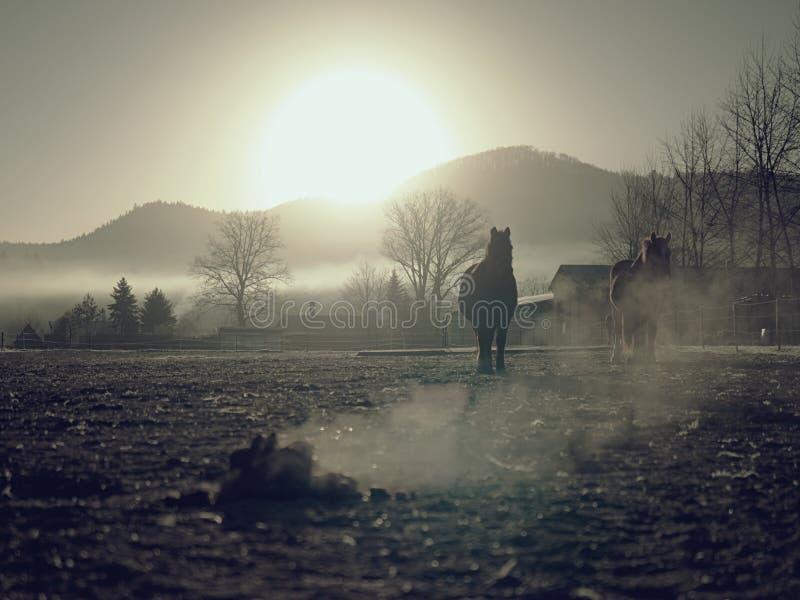 Häst i den leriga körningen som röker högen av avföring arkivbild