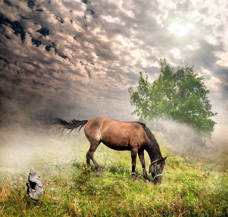 Häst i en äng royaltyfria bilder