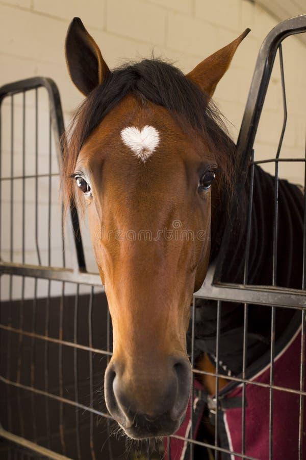 Häst i ett stall arkivfoto