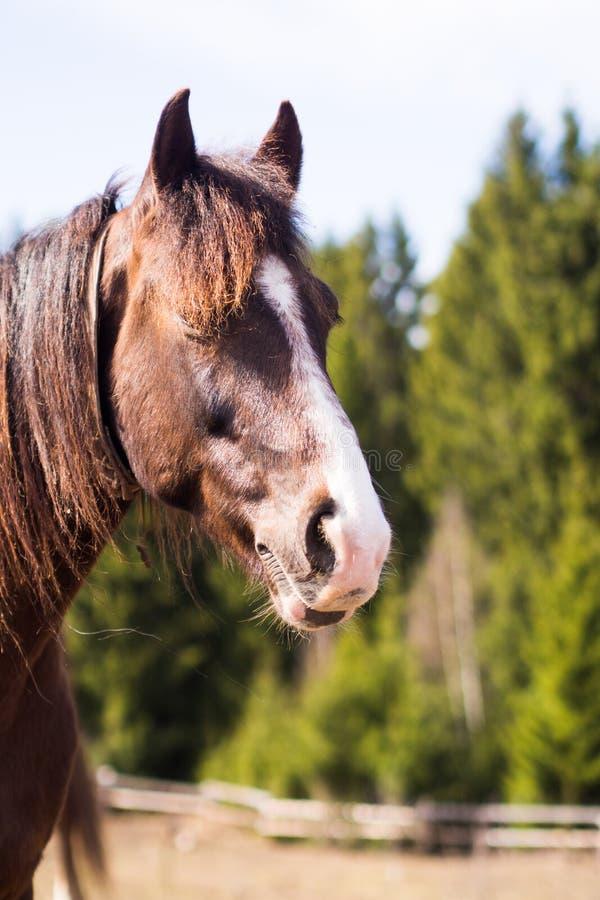 Häst i lös natur arkivfoto
