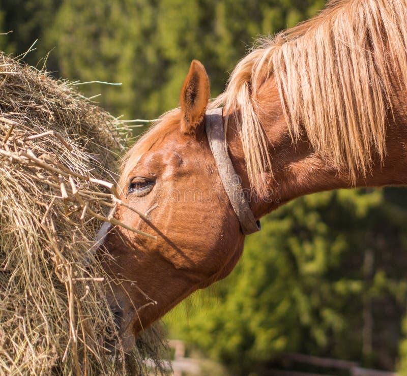 Häst i lös natur arkivfoton