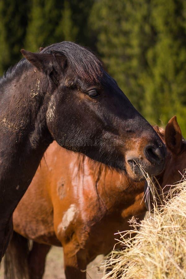 Häst i lös natur arkivbild
